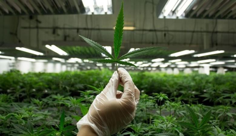 12% Angebot Reseller Weed